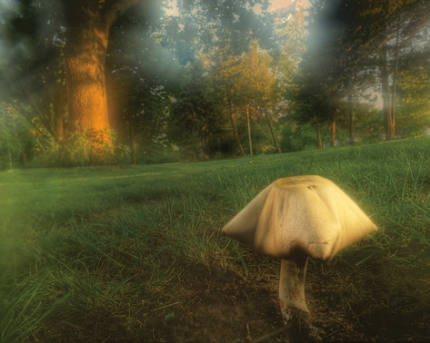 Don Wolf, a photographer who lives in Kansas City, Kan., recently took this photo of a toadstool in his front yard. (Photo by Don Wolf/http://don-wolf.artistwebsites.com/)