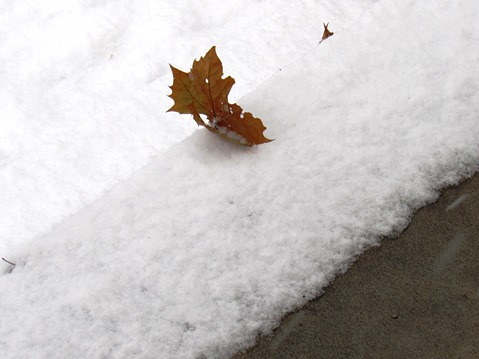 A close-up look at the snow Sunday morning in Wyandotte County. (Staff photo)