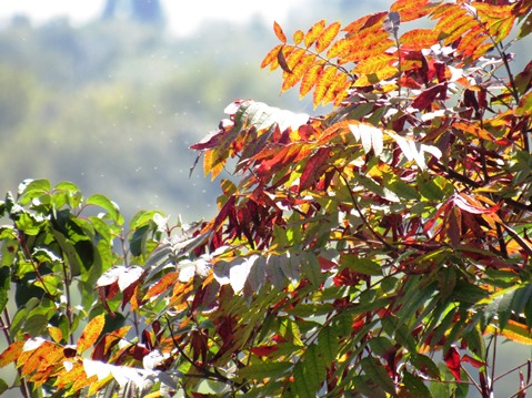 Most of Wyandotte County Lake Park foliage was green on Saturday, Sept. 26, but some red fall leaves were showing in a few places. (Staff photo by Mary Rupert)