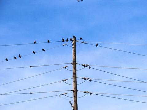 Birds perched on a line in the parking lot at Kaw Point Park during Eagle Days on Saturday, Jan. 30. (Staff photo by Mary Rupert)