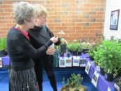 Mary Ortiz, right, and Janet Roseland, left, shopped for plants at the Master Gardeners Plant Sale Saturday, April 30, at the Extension Office, 1200 N. 79th St., Kansas City, Kan. The sale runs through 2 p.m. Saturday. They had tomato and pepper plants, herbs, hanging baskets, flowers and more available. Proceeds benefit the Master Gardeners' activities in Wyandotte County. (Staff photo by Mary Rupert)
