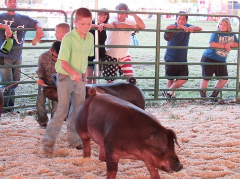 4-H members participated in a swine show on Wednesday at the Wyandotte County Fair. (Staff photo by Mary Rupert)