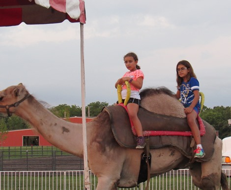 Camel rides were another attraction at the Wyandotte County Fair on Wednesday. There is a $7 charge for a camel ride. (Staff photo by Mary Rupert)
